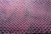 pic of lizard skin  - Crocodile skin pattern shining with natural light - JPG