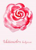pic of english rose  - Vector illustration of Hand drawn red Watercolor rose - JPG