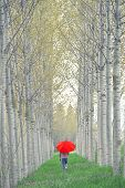 stock photo of walking away  - Woman with Red Umbrella Walking Away Through The Tree Alley on Cloudy Afternoon - JPG