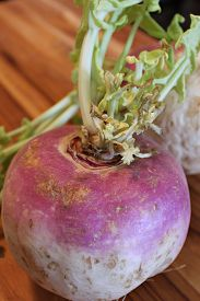 foto of turnip greens  - Closeup of a turnip with the greens still attached - JPG
