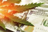 Marijuana Goes Out For A Hundred Dollar Bills. Money With Marijuana Leaves Close-up, High Quality. H poster