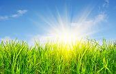 hierba, el cielo y el sol