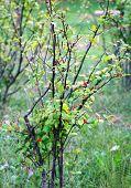 Wild Bush With Berries