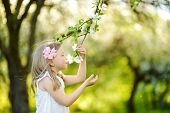 Adorable Little Girl In Blooming Apple Tree Garden On Beautiful Spring Day. Cute Child Picking Fresh poster