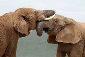 African Elephant Greeting
