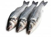 Fresh  Whole Sea Bass Fish Isolated On A White poster