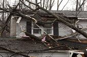 ANDOVER, NJ - OCT 30: A tree lays across the roof of a home after Hurricane Sandy made landfall in t