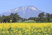Mt. Iwate And Rape Field, Canola Crops
