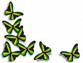 picture of jamaican flag  - Jamaican flag butterflies isolated on white background - JPG