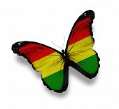 Bolivian Flag Butterfly, Isolated On White