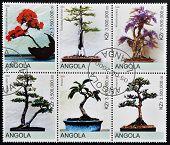 ANGOLA - CIRCA 2000: Collection stamps shows different bonsai circa 2000