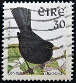 IRELAND - CIRCA 1998: A stamp printed in Ireland shows Common Blackbird Turdus merula circa 1998