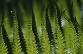 Close-up of fern leaves focus on foreground