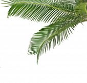 Border of Palm leaves isolated on white background