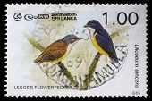 SRI LANKA - CIRCA 1989: A stamp printed in Sri Lanka shows Legges flowerpecker bird, circa 1989
