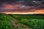 foto of battlefield  - Corn Field Sunrise  - JPG