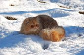 Gilbi cat on snow