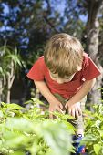 Little boy examining undergrowth in vegetable garden