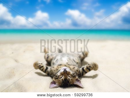 cat on beach and blue sky poster