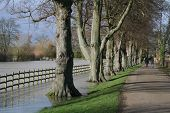 Flooded field and tree lined walkway.