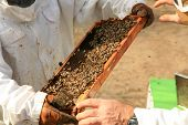 stock photo of bee-hive  - Amazing views of Real Honey Bees swarming on their Comb doing what bees do naturally - JPG