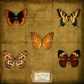 vintage ephemera background243 poster