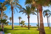 Oropesa de Mar in Castellon palm tree garden in mediterranean sea