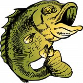 pic of bass fish  - big mouth bass vector illustration image scalable to any size - JPG