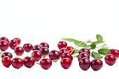 Berries Ripe Cherry With A Branch Isolated On White Background.