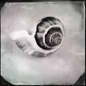 Instagram filtered image of a sea shell