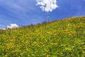 Beautiful flower meadow in the Italian alps Europe