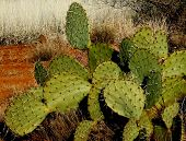 picture of cactus  - Arizona cactus from the desert near Sedona.