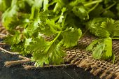 Organic Raw Green Cilantro