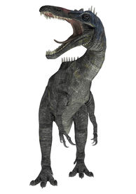 picture of crocodilian  - 3D digital render of a suchomimus tenerensis isolated on white background - JPG