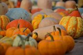 All sorts of pumpkins