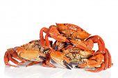 some raw velvet crabs on a white background