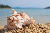 Close-up shot of a beautiful seashell on the beach