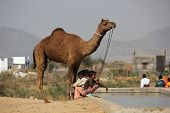 Children With A Camel