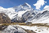 Machhapuchchhre Base Camp Pokhara Nepal / Mount Machhapuchchhre (fish Tail)