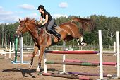 picture of breed horse  - Brunette woman show jumping on brown horse in summer - JPG