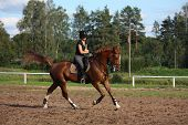 picture of chestnut horse  - Beautiful brunette woman riding  - JPG