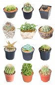pic of spiky plants  - Set of 15 variety Cactus potted plants isolated on white - JPG
