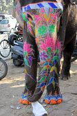 Traditional Indian Painted Elephant