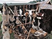 Hanging Animal Skulls And Fur In A Medieval Market