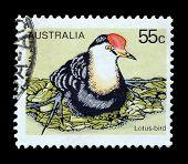 Lotus bird