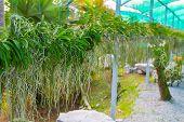 Orchid Garden