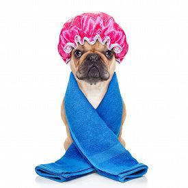 pic of bulldog  - french bulldog dog ready to have a bath or a shower wearing a bathing cap and towel isolated on white background - JPG