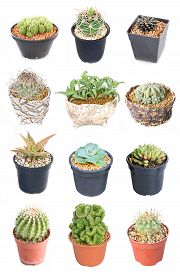 picture of spiky plants  - Set of 15 variety Cactus potted plants isolated on white - JPG