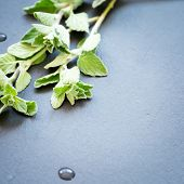 picture of oregano  - Twigs of fresh oregano on a dark stone background - JPG