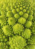 stock photo of romanesco  - romanesco broccoli background - JPG